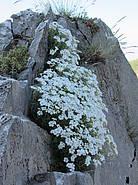 Bergblumen blühen am Wegesrand